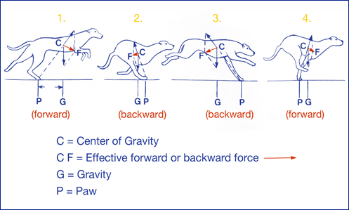 centre of mass frame and laboratory frame pdf