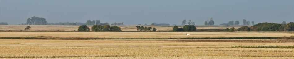 FTG_Canadian Prairies