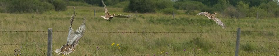 Upland Birds & Conservation