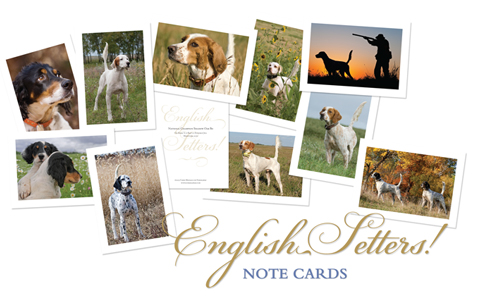 English Setters Note Cards_2