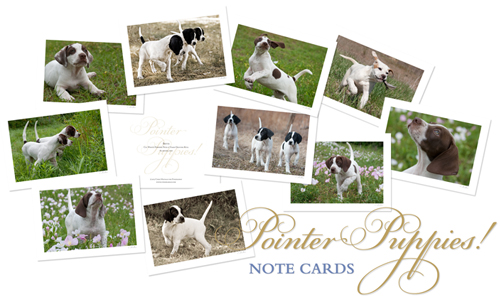 Pointer Puppy Note Cards_2
