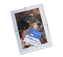 Setter Notecards_stack