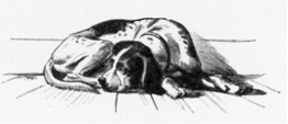 Sleeping Hound
