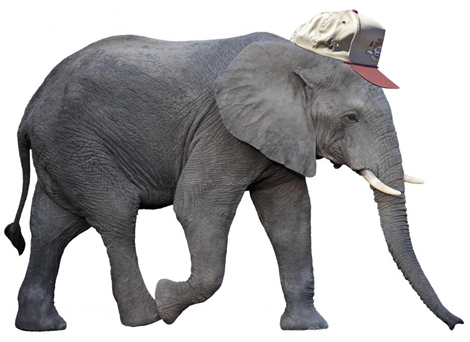 Elephant with Ferrel Cap