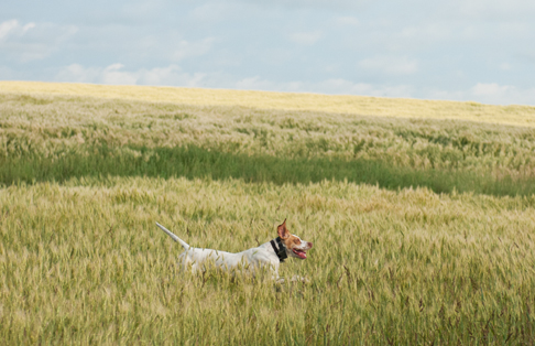 Lucy Running_Prairies