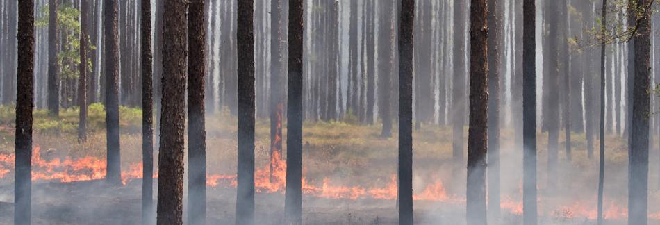 HPBanners189_Burn