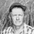 Points from the Pros ~ Jack Harper on Field Trial Bird Dog Attributes