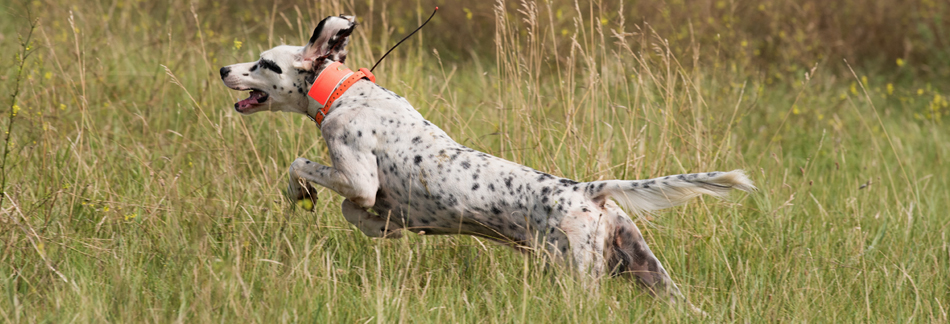 HPBanners226_US Chicken_2019_Setter